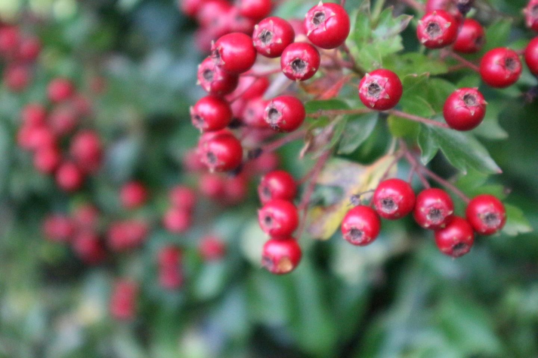 Nine Tips for an Eco Christmas